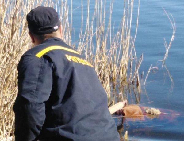 Из реки достали тело 52-летнего жителя поселка Александрийское