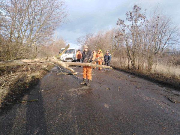 Сломанные дорожные знаки и деревья – последствия сильного ветра