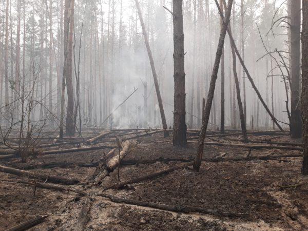 Александрийские спасатели тушат пожар в лесах Чернобыля