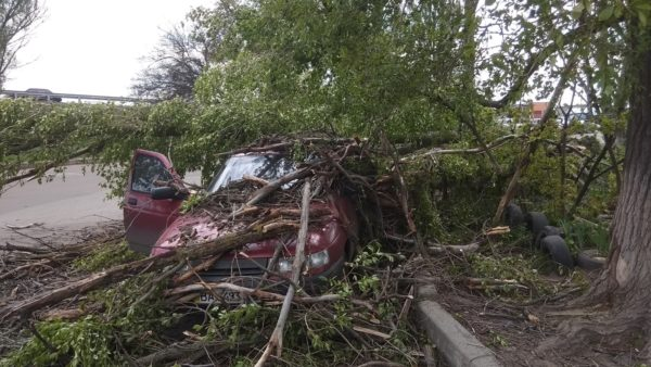 В Александрии на БАМе дерево упало на автомобиль с людьми