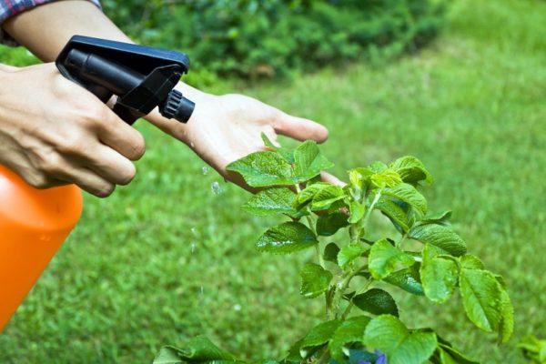 Інсектициди-надійний захист від комах-шкідників