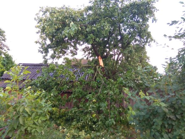В Александрии ураган повредил деревья