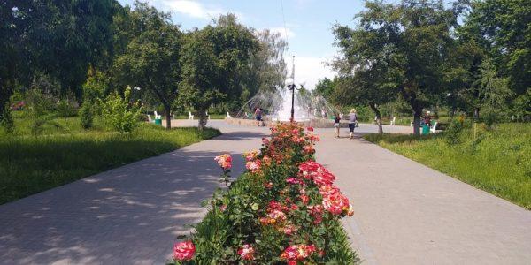 В Александрии 8 человек заплатят по 1360 грн штрафов за воровство роз