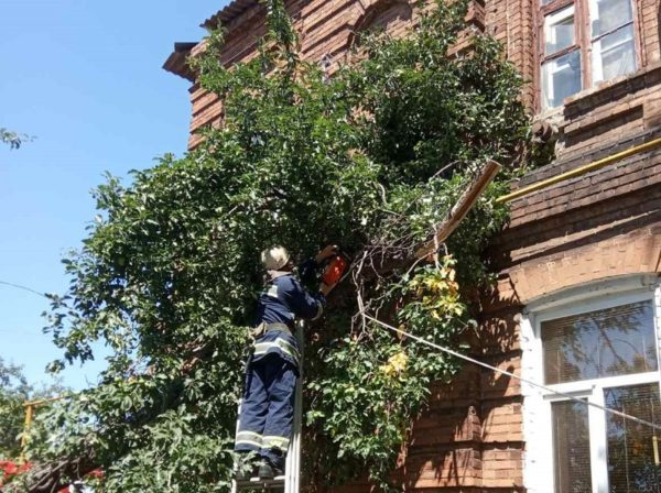 В Александрийском районе дерево упало на газовую трубу жилого дома
