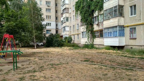 Александрийцы возмущены тем, что коммунальщики спилили молодой орех возле детской площадки (ФОТО/ВИДЕО)