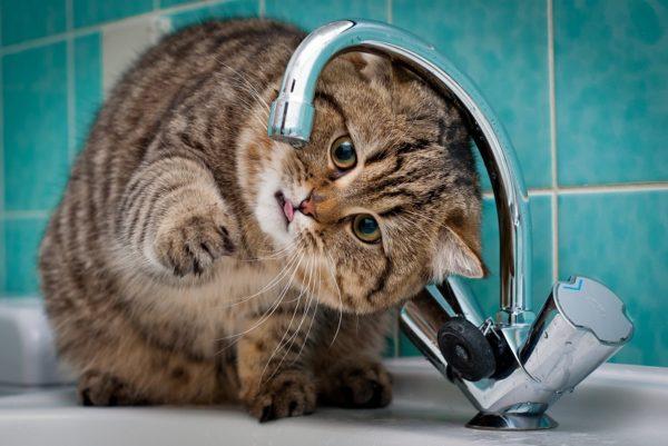 В Александрии три дня не будет воды