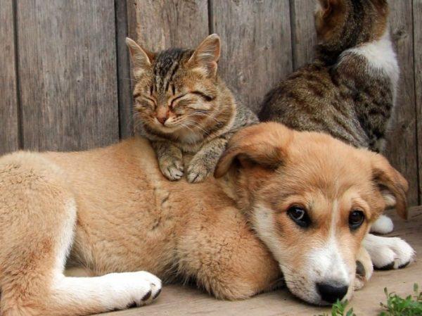 32 жителей Кировоградской области оштрафовали за отказ вакцинировать животных