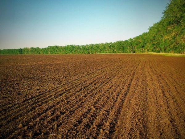 Суд обязал арендатора вернуть государству 52 гектара земли в Александрийском районе
