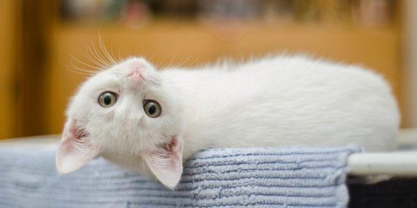 Завтра в Александрии будут бесплатно вакцинировать домашних животных против бешенства