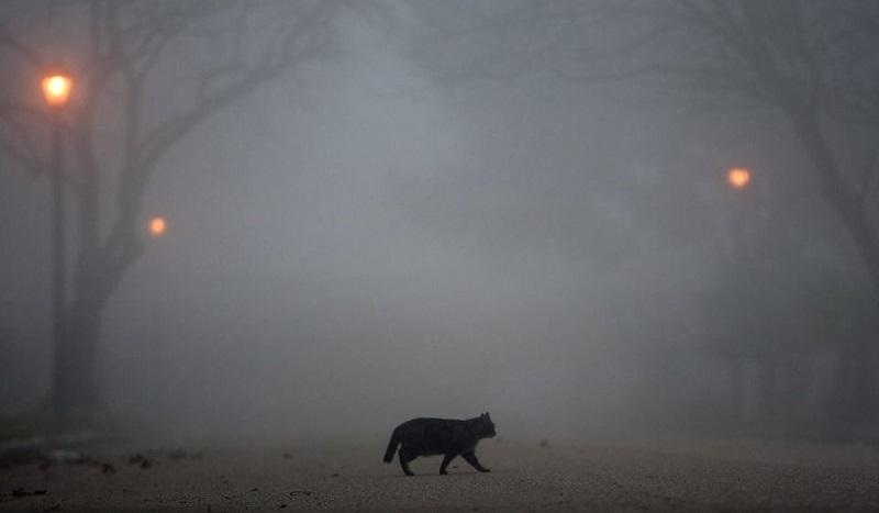 Жителей Кировоградской области предупреждают о плохой видимости на дорогах из-за тумана