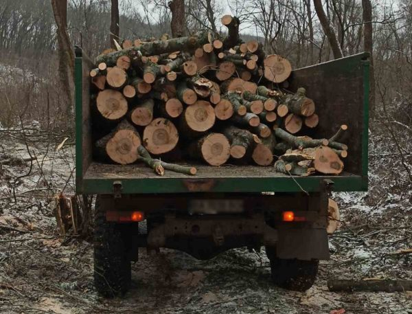 В Александрийском районе обнаружили незаконную вырубку деревьев (ФОТО)