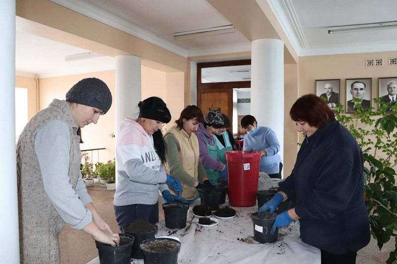 Работники КП «Зеленгосп» планируют вырастить около 10 000 саженцев цветов для клумб Александрии
