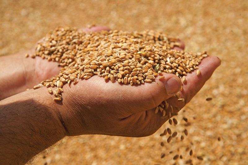 В Кировоградской области директора зернового склада подозревают в растрате зерна на 6,6 млн. грн (ФОТО)