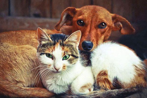 Городская власть Александрии намерена способствовать в решении вопроса бездомных животных
