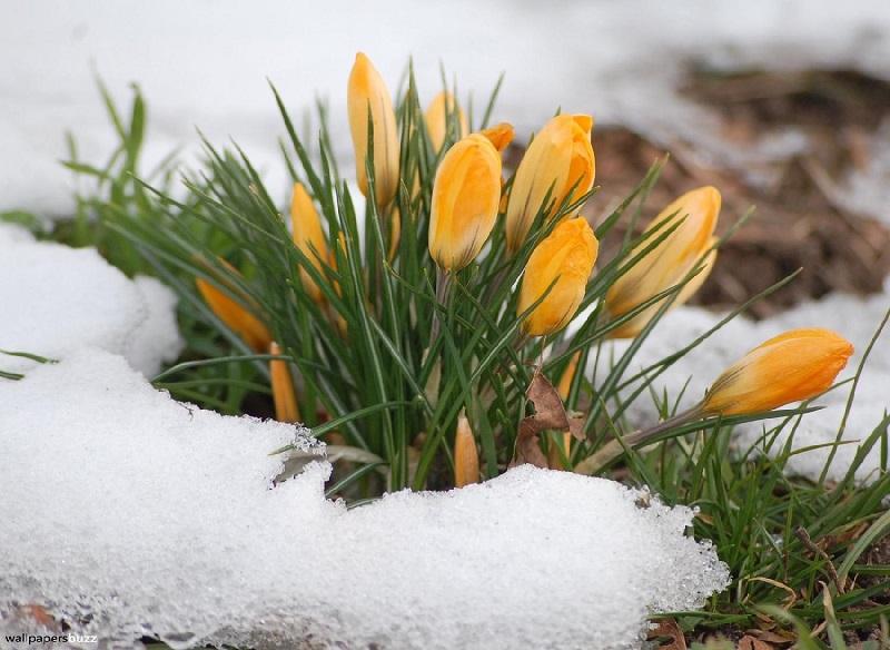 Прогноз погоды на первые дни марта