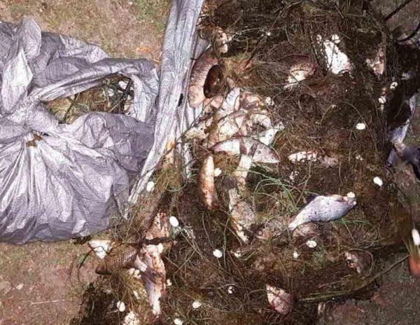 Александрийские полицейские задержали рыбаков, которые незаконно выловили рыбу на 37 тысяч гривен (ФОТО)