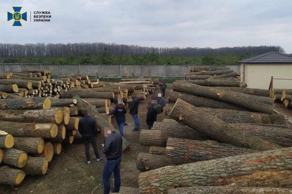 Из лесов Кировоградской области под видом низкосортной продукции за границу продавали ценные породы древесины (ФОТО)