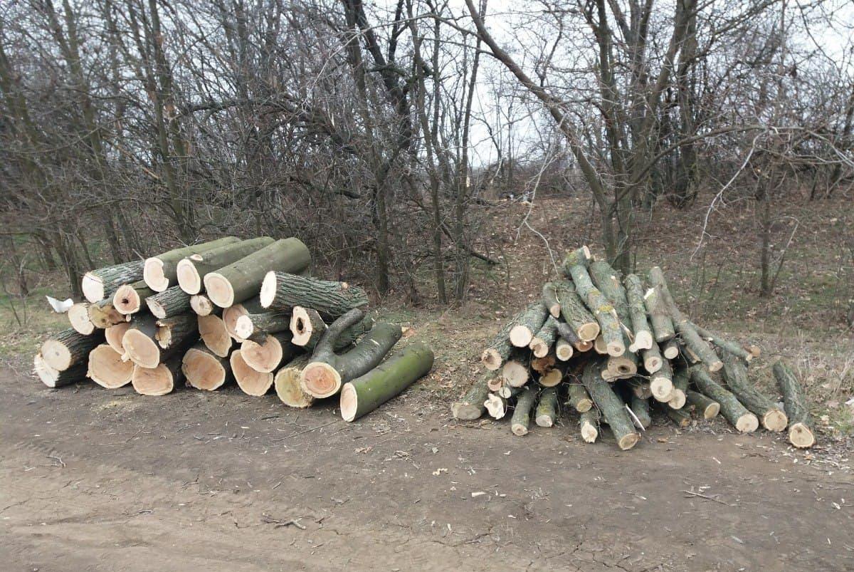 31-летнему мужчине объявлено о подозрении в вырубке деревьев на 100 тысяч гривен
