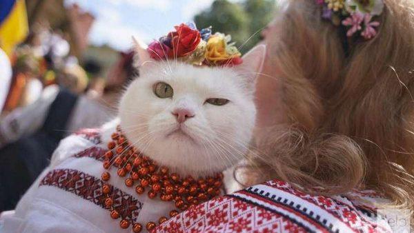 Сегодня в Александрии состоятся праздничные мероприятия ко Дню вышиванки