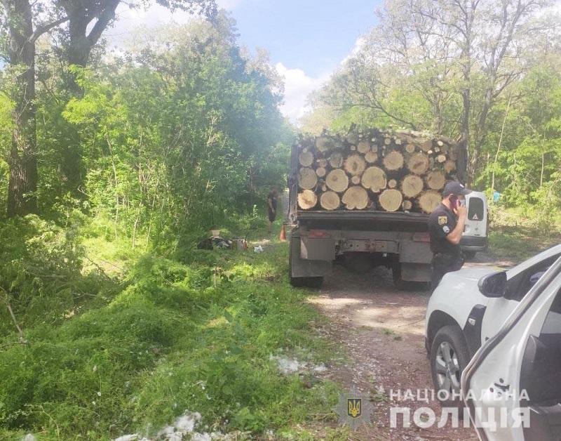 31-летний александриец срубил более сотни деревьев акации и клена защитной лесополосы (ФОТО)
