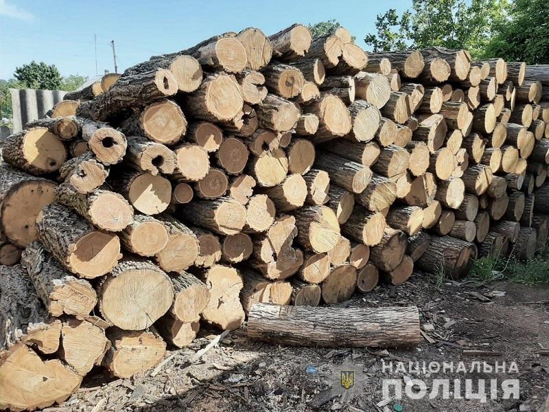 В Кировоградской области «черные» лесорубы срубили защитные лесонасаждения на сумму более 700 тыс. грн (ФОТО)