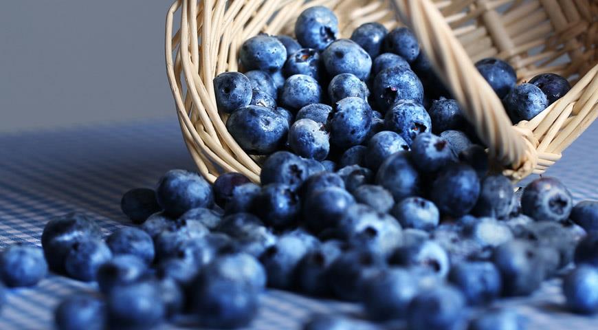 Голубика обыкновенная: все самое важное о пользе и вреде ягоды
