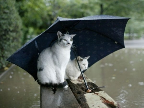 В Кировоградской области прогнозируют дожди и сильный ветер