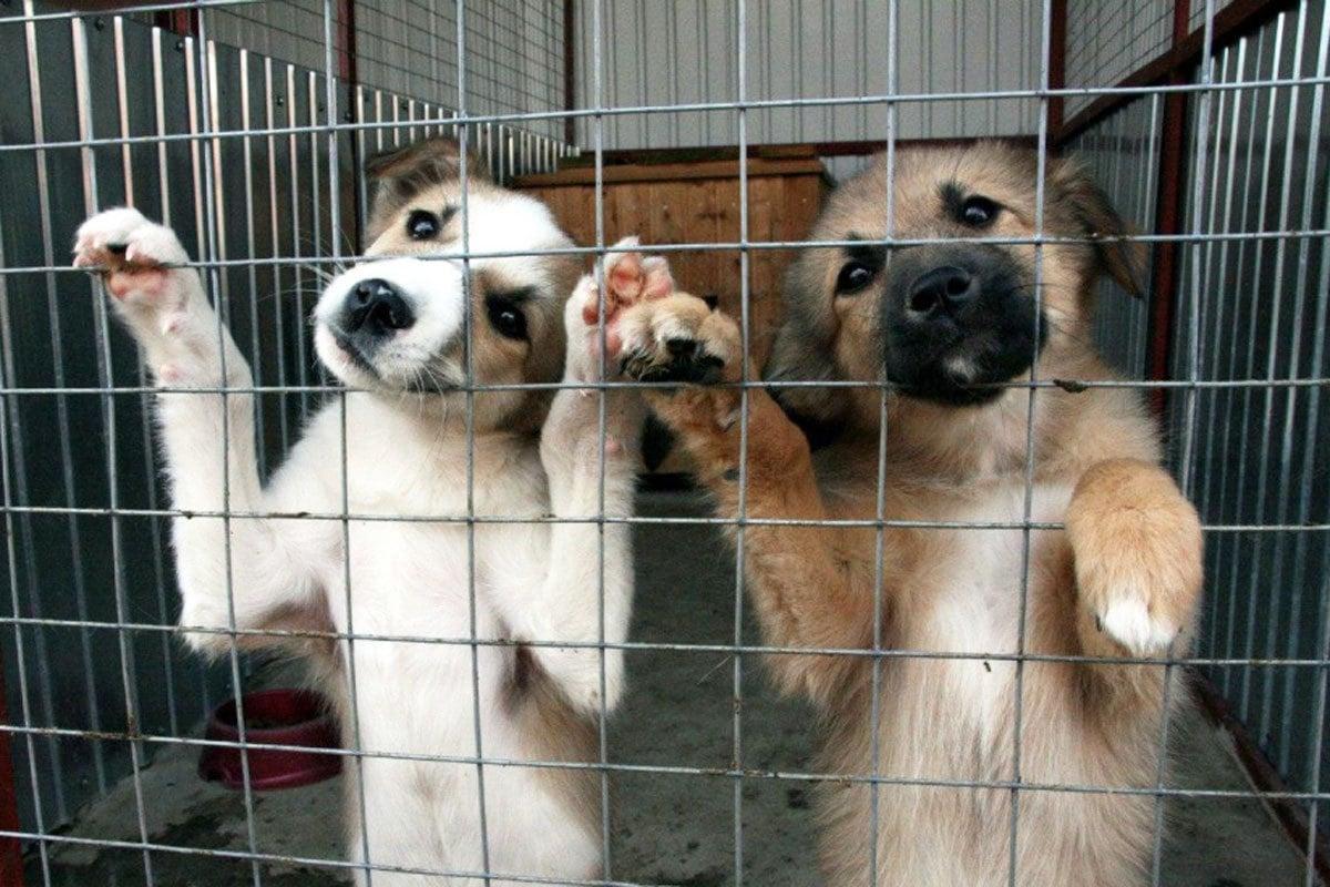 Из александрийского бюджета выделили 100 тысяч гривен помощи приюту для животных «Друг»